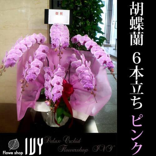 【配達無料回収無料】胡蝶蘭 6本立(ピンク)   新宿花屋IVY