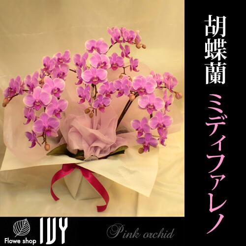 舞台楽屋花OR009 胡蝶蘭 3本立 ミディファレノ