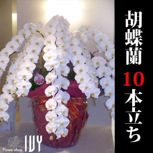 渋谷OR001 胡蝶蘭10本立ち 白