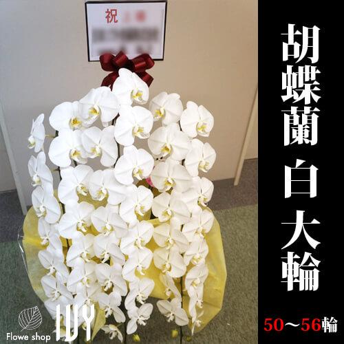 【配達無料回収無料】胡蝶蘭 白 大輪 50~56輪   新宿花屋IVY
